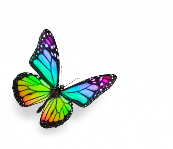 The Butterfly And The Flower Allworship Com