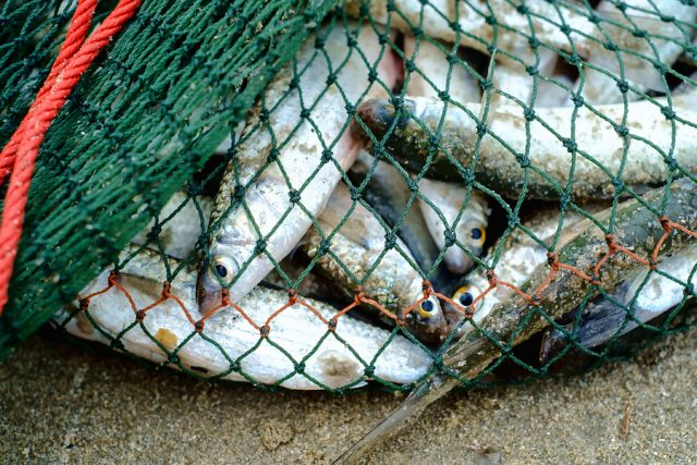 Full of sea fish in fishing net on the sandy beach were caught by fishermen